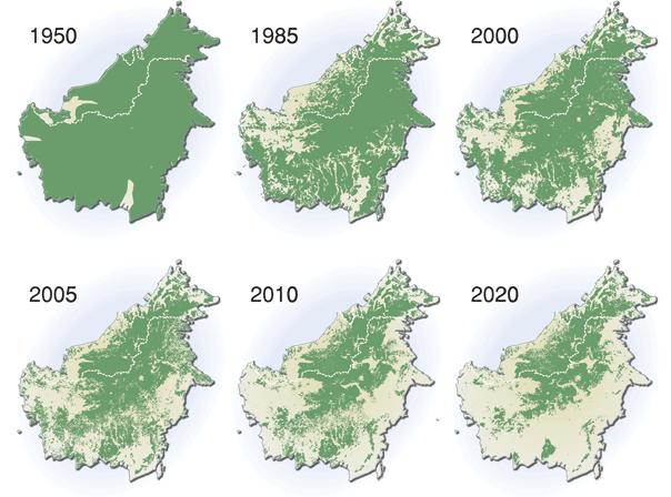 Evolución de la deforestación en Borneo a causa del aceite de palma
