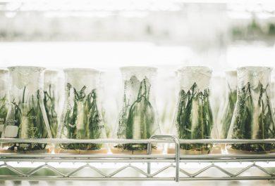 Innovación agroalimentaria: limitaciones y beneficios