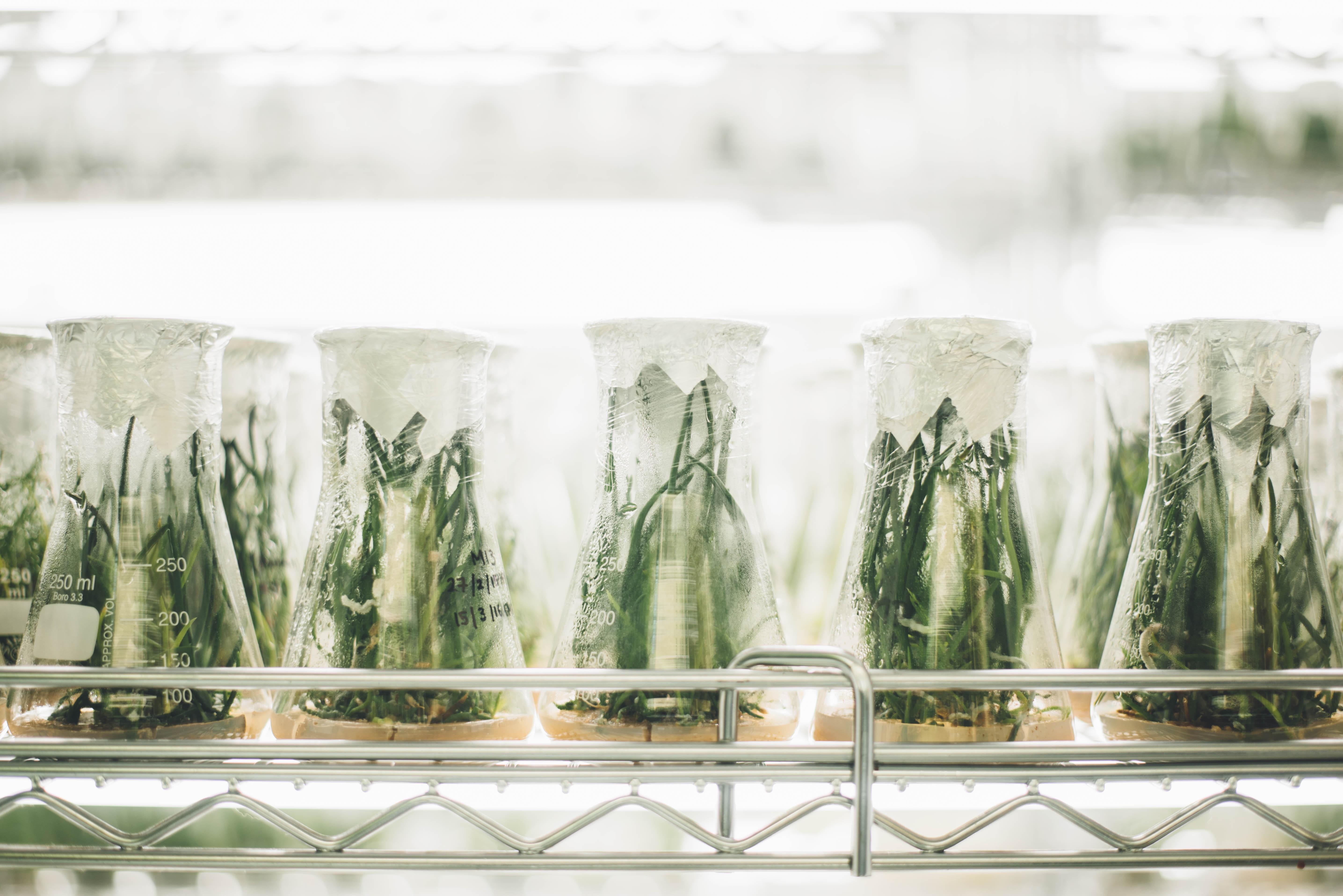 El trabajo de laboratorio, base en la innovación agroalimentaria