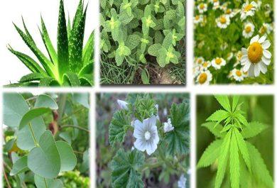 Malas hierbas medicinales